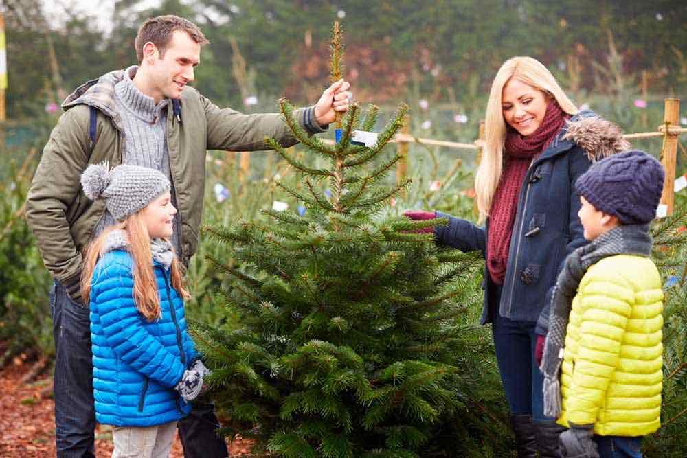 Weihnachtsbaum Kaufen Gütersloh.Tipps Rund Um Den Weihnachtsbaum Gütsel Stadtmagazin Für Gütersloh